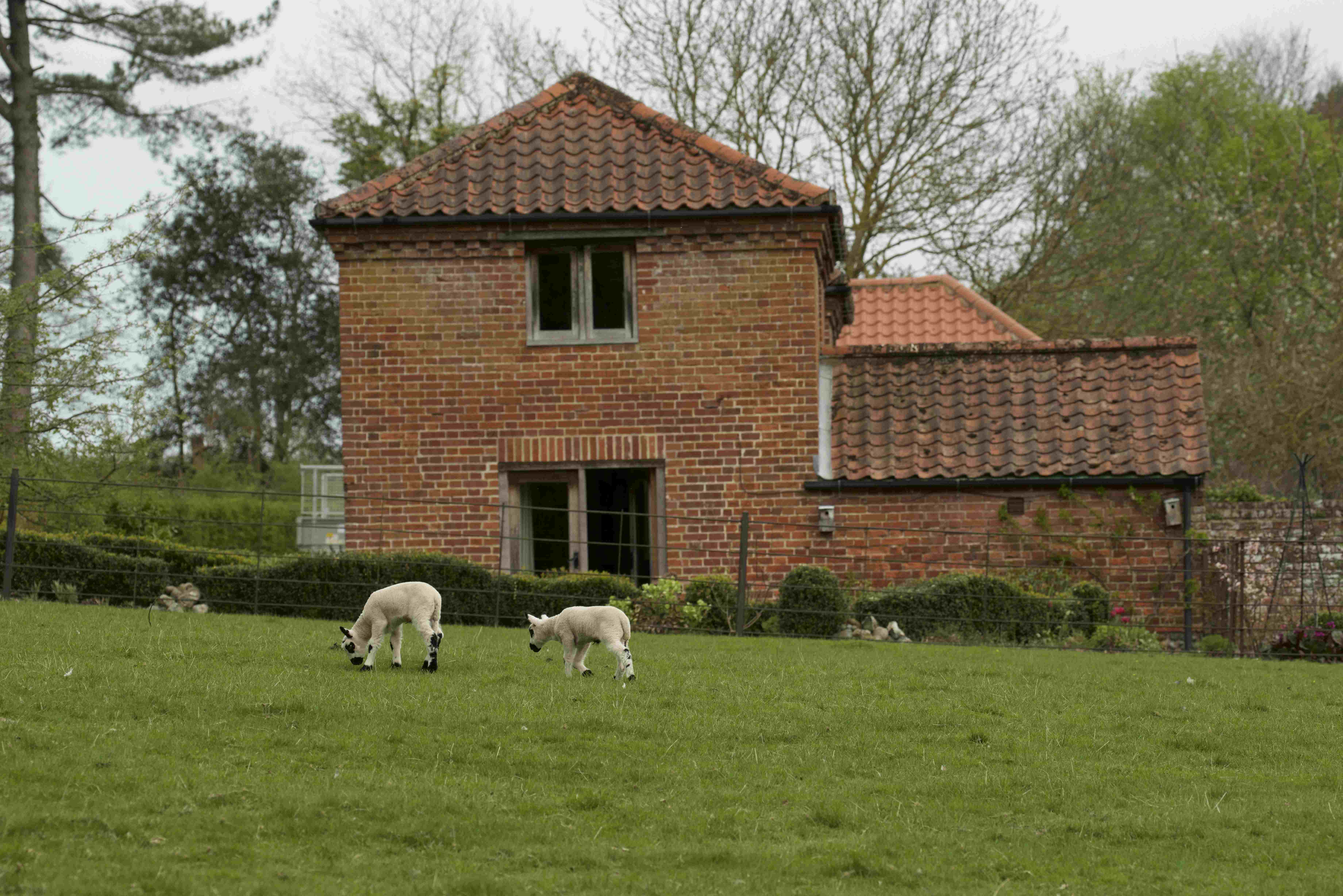 Burrow Cottage and Lambs